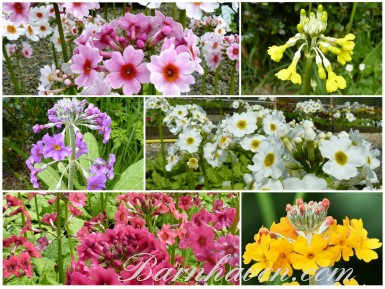 CANDELABRA Plant collection