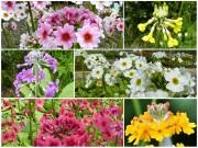 CANDELABRES - Collection de plantes
