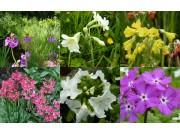ASIATIQUES - Collection de plantes