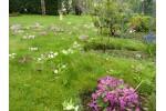 Primrose Seed mix