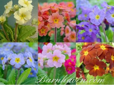FLOWER ARRANGER'S Seed mix