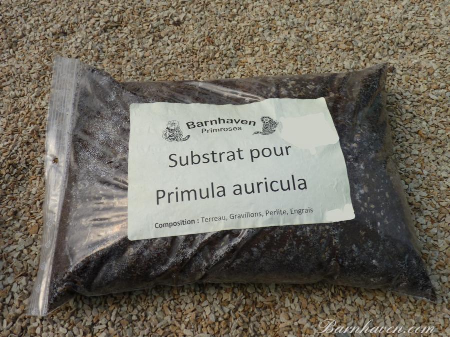 Substrat pour auricules