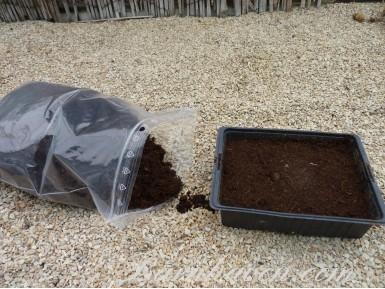 Primula compost
