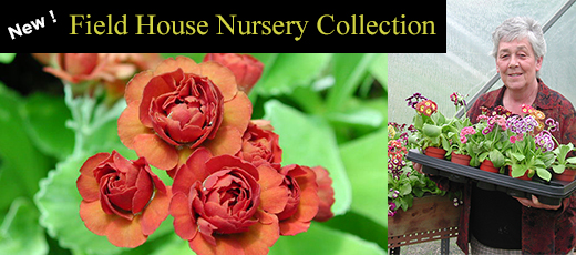 Field House Nursery Collection